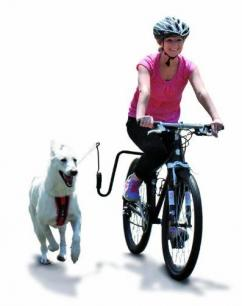 white german shepherd dog springer bike bicycle harnessed harness